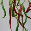 Joe´s Long Cayenne Chilipflanze