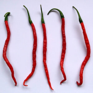 Cabe Keriting Chilipflanze