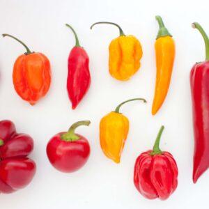 Chilisamemen von A bis Z